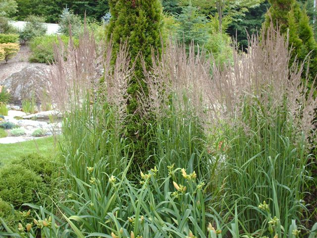 Perennial Grasses Care : Ornamental grasses and daylilies