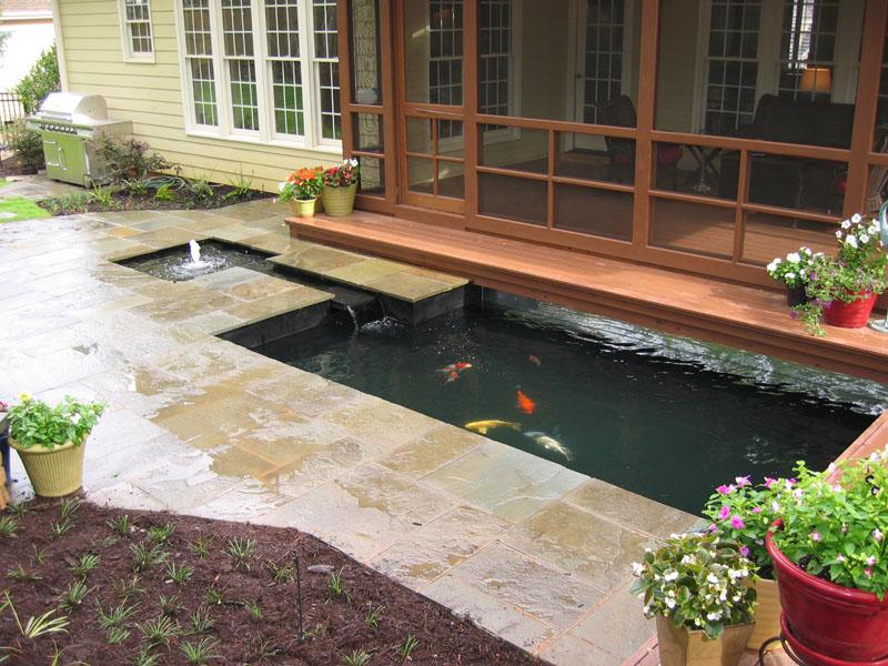 Our koi and ponds for Koi pond modern
