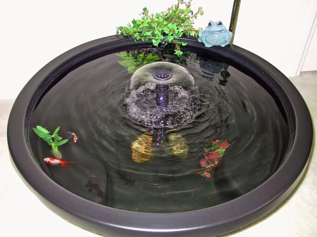 My new goldfish patio pond for 50 gallon koi pond