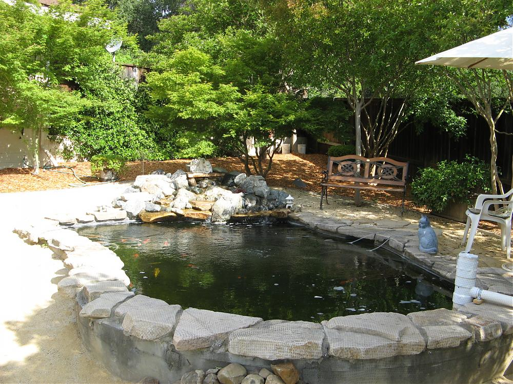 Our koi and ponds page 3 for Koi pond forum