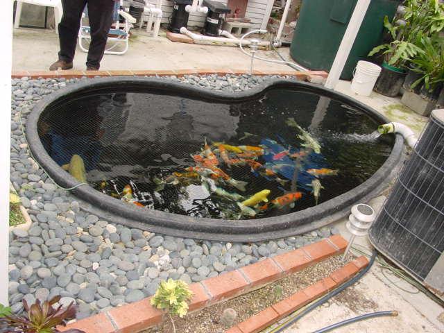 Pre formed pond question for Blue koi pond liner