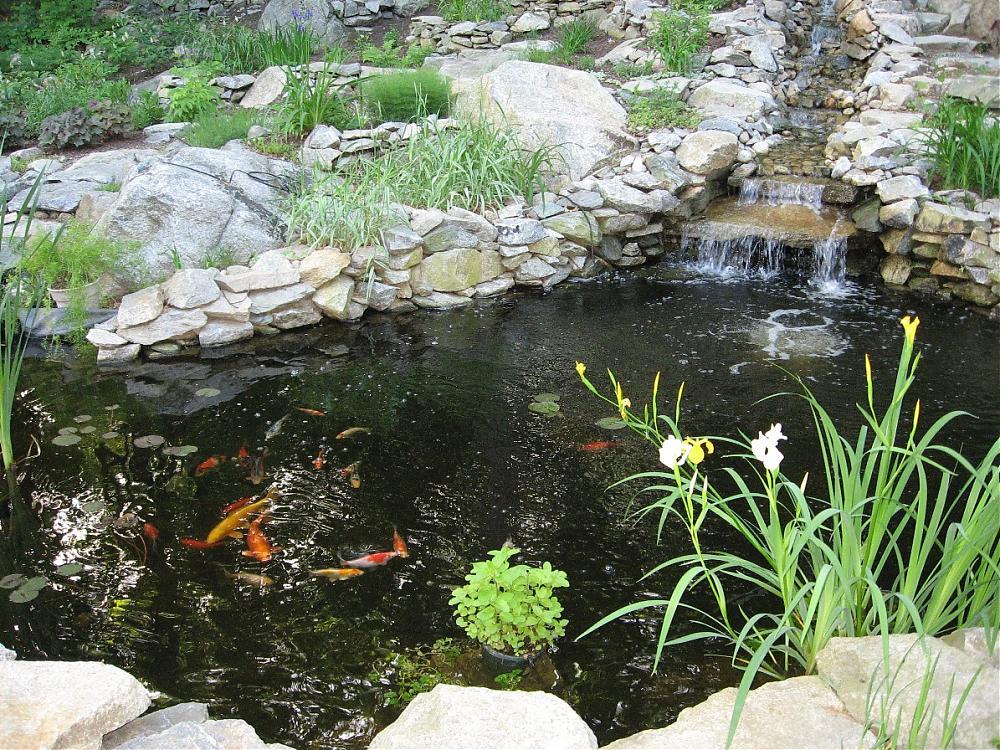 Our koi and ponds page 4 for Koi pond forum