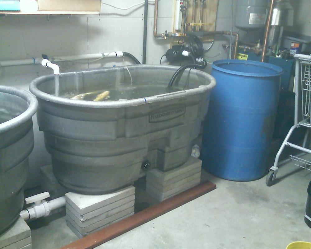 100 Gallon Fish Tank On Second Floor Two 100 Gallon Tanks