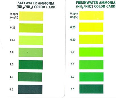 Scan aquarium pharmaceuticals api ammonia test kit color for Ammonia levels in fish tank