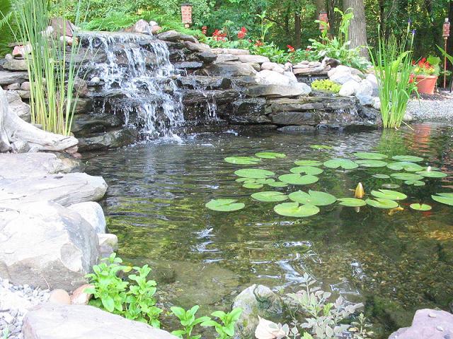Our koi and ponds page 7 for Koi pond forum