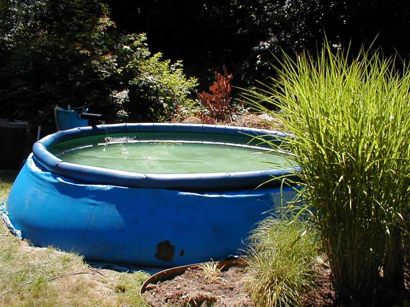 Intex pool for pond for Koi intex pool
