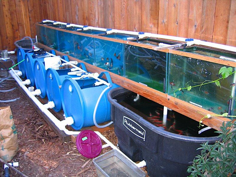 Painting Your Aquarium / Fish Tank Background