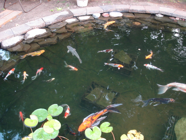 What is the correct way to build a quality koi pond for Best way to build a pond