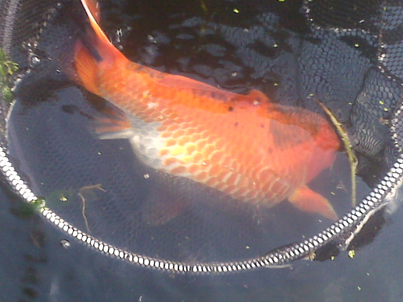 Fatty fish for What are fatty fish