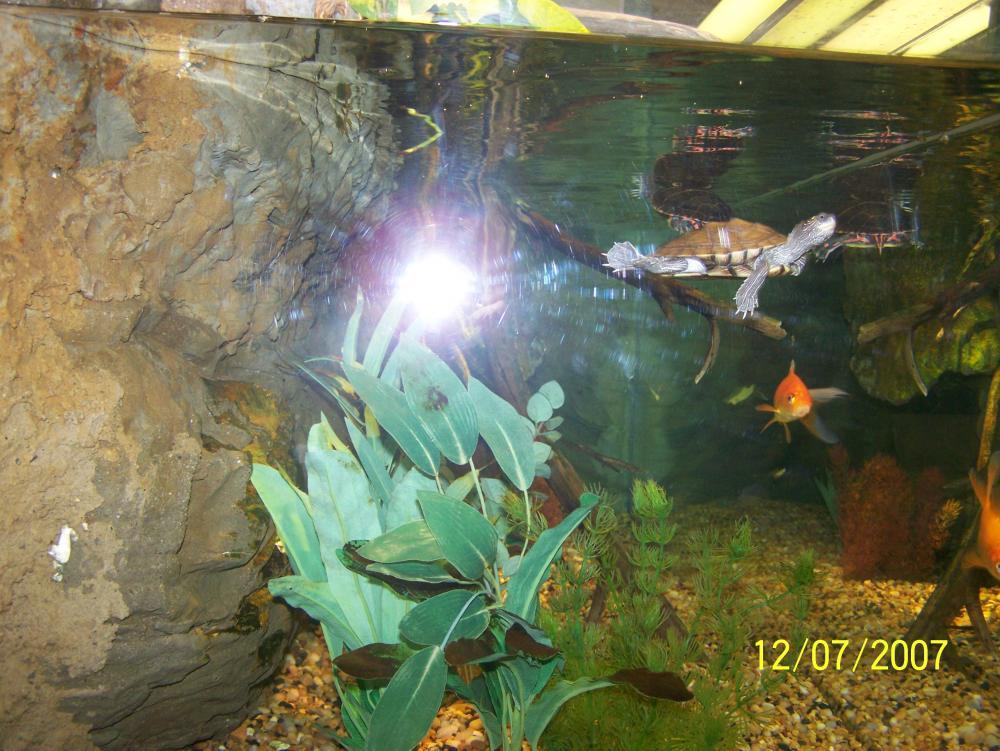 My Indoor Turtle Aquarium