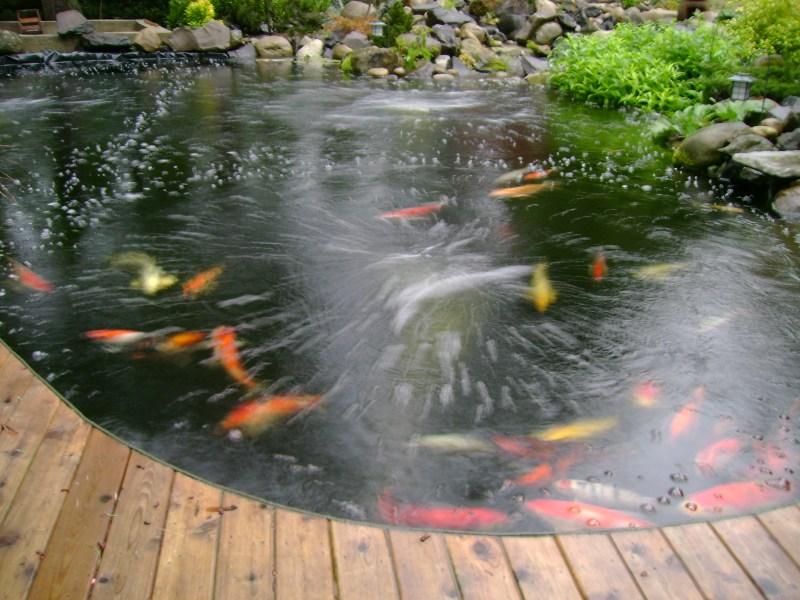 Decking around pond for Koi pond deck