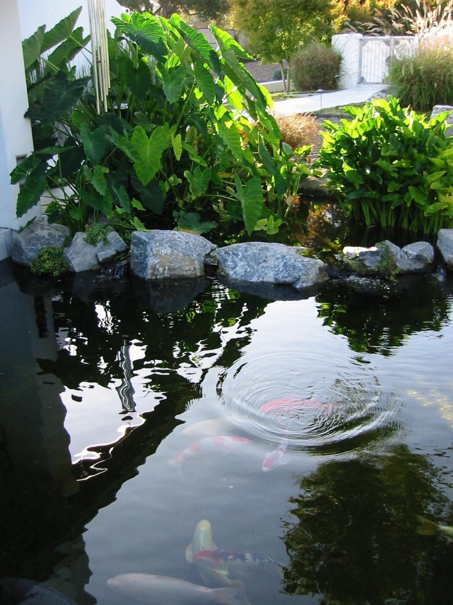 Bog pond filter cleanout frequency for Pond bog filter