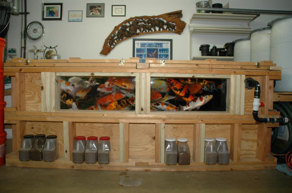 Indoor koi fish tank