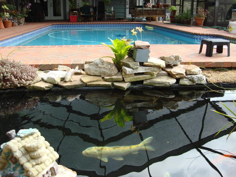Swimming pool convert to koi pond for Pool with koi pond