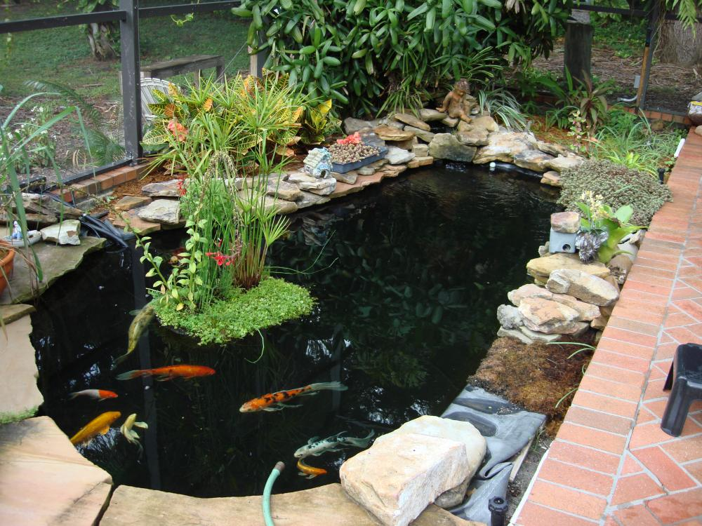 Swimming pool convert to koi pond for Koi pond forum