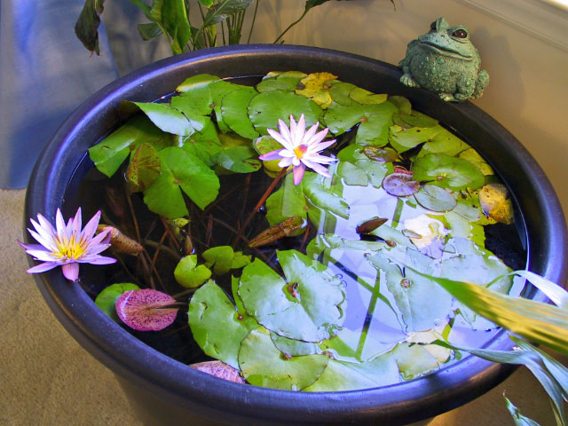 attached images attachment attached images: diy patio pond
