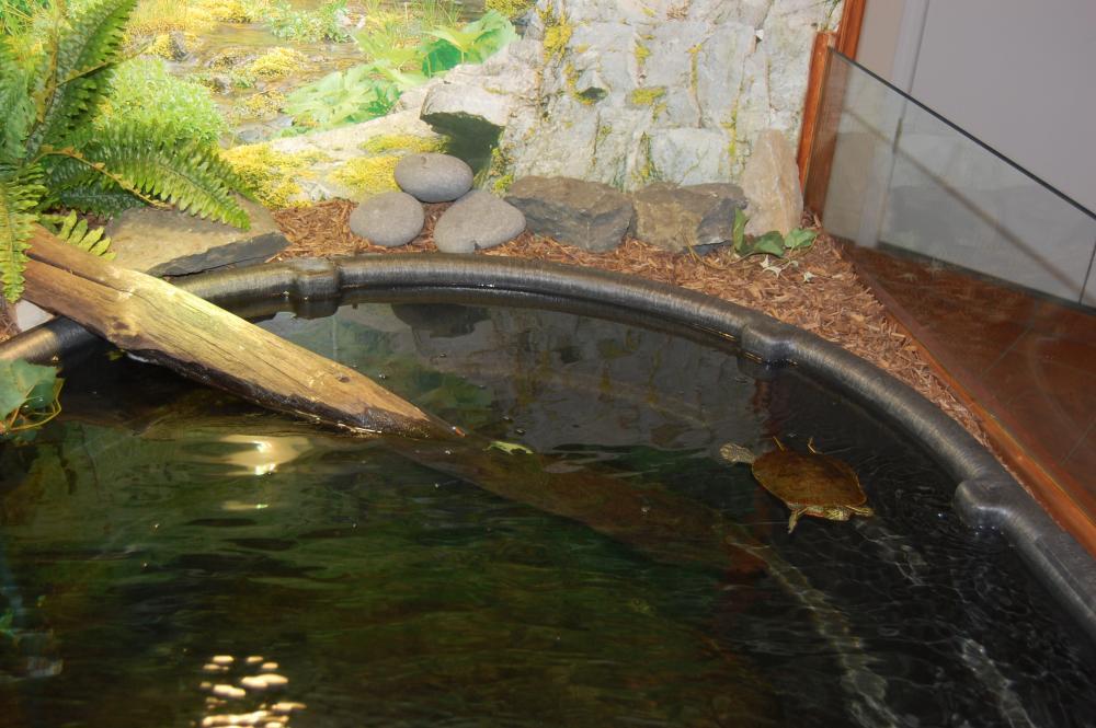 Indoor Turtle Pond Start To Finish
