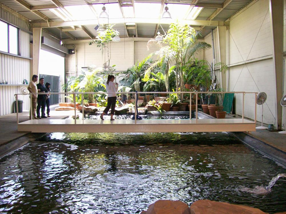 40000 Gallon Indoor Pond