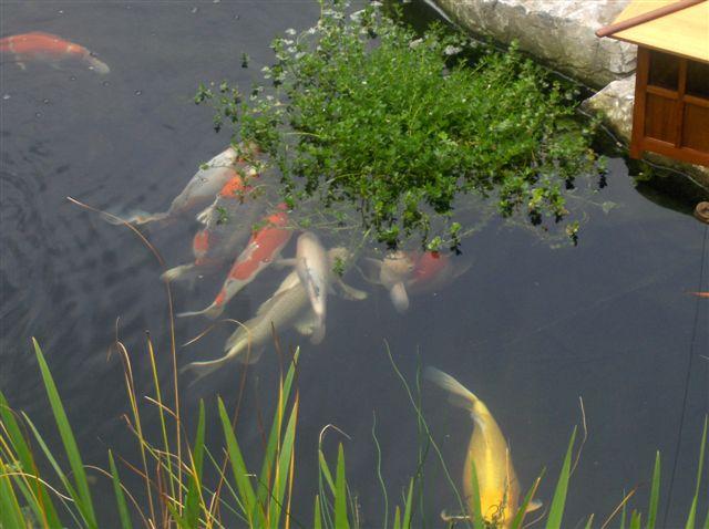 Make your own floating island under 20 for Plastic floating pond plants