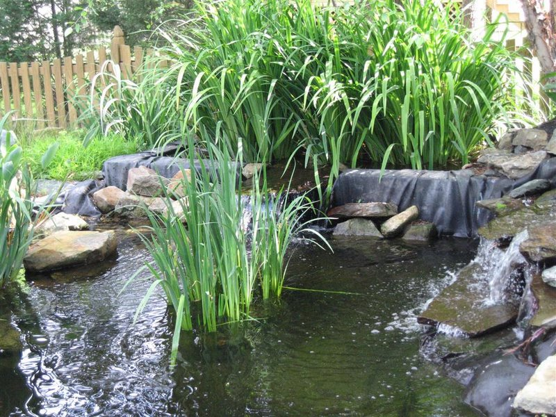 Bog or veggie filter anyone for Pond plant filter