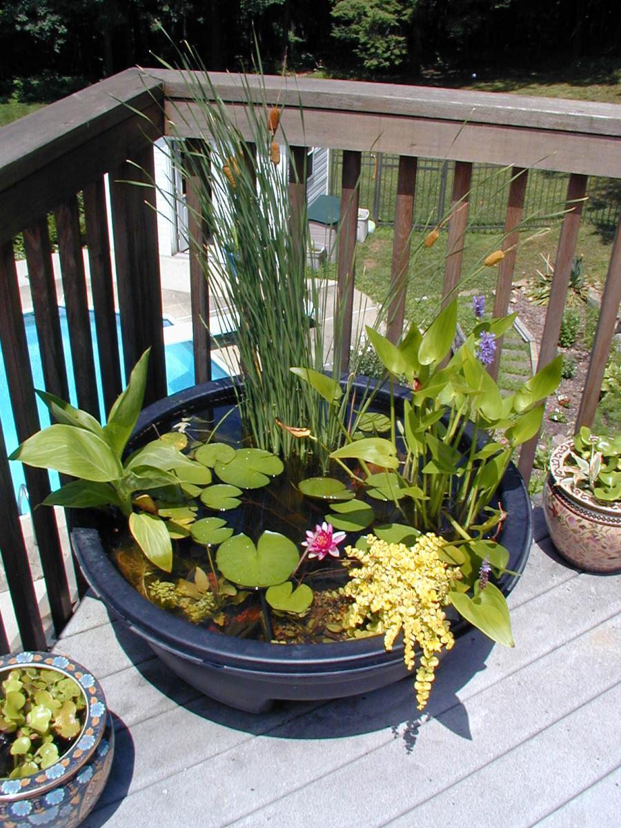 Mini Laghetto Per Terrazzo piccolo laghetto in un vaso per decorare il giardino! 20