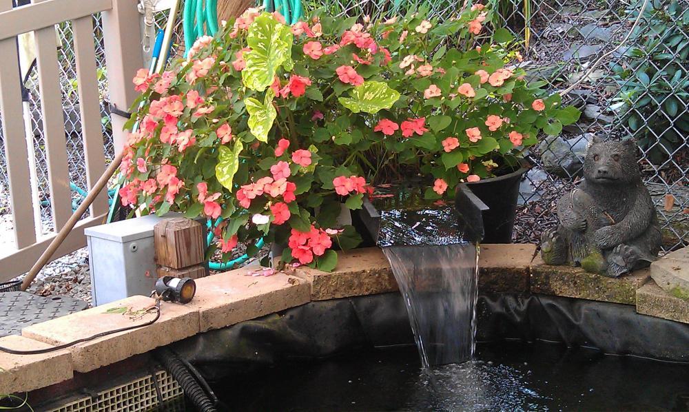 Impatient in bog filter for Koi pond bog filter