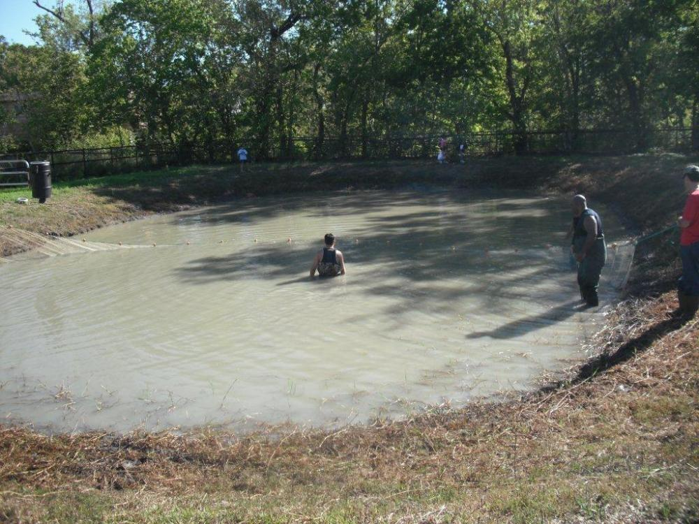 Above ground ponds for Small round pond
