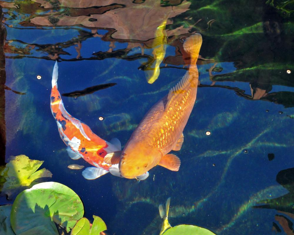 New Koi Pond Construction Plumbing Filter Design Questions Page 32