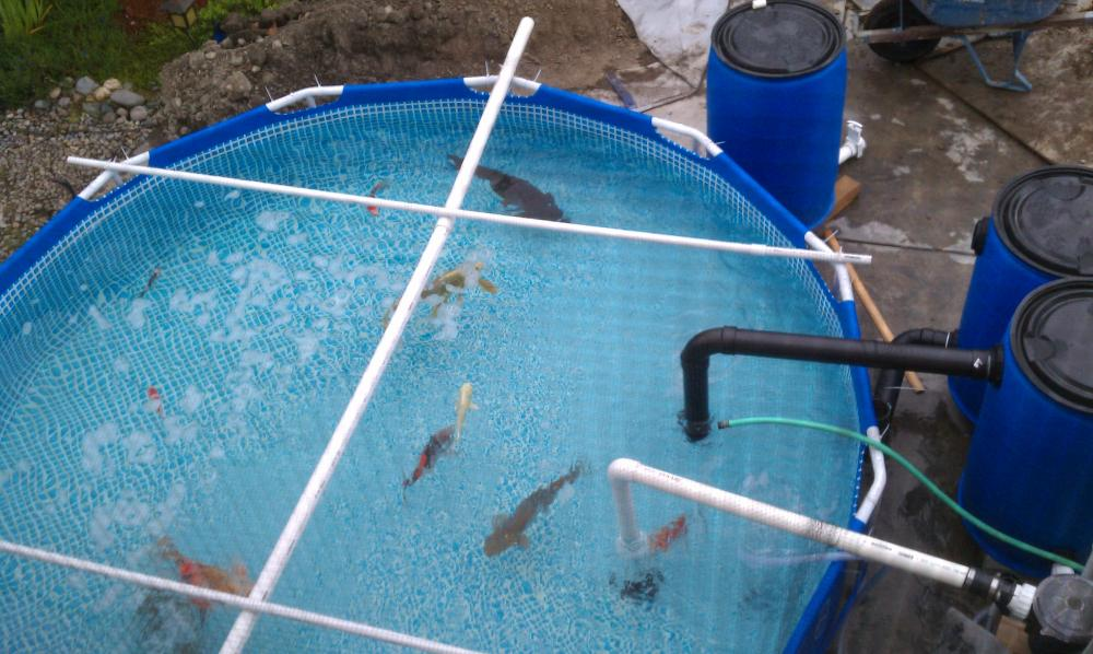 Using portable pool as temporary pond for Pool filter for koi pond