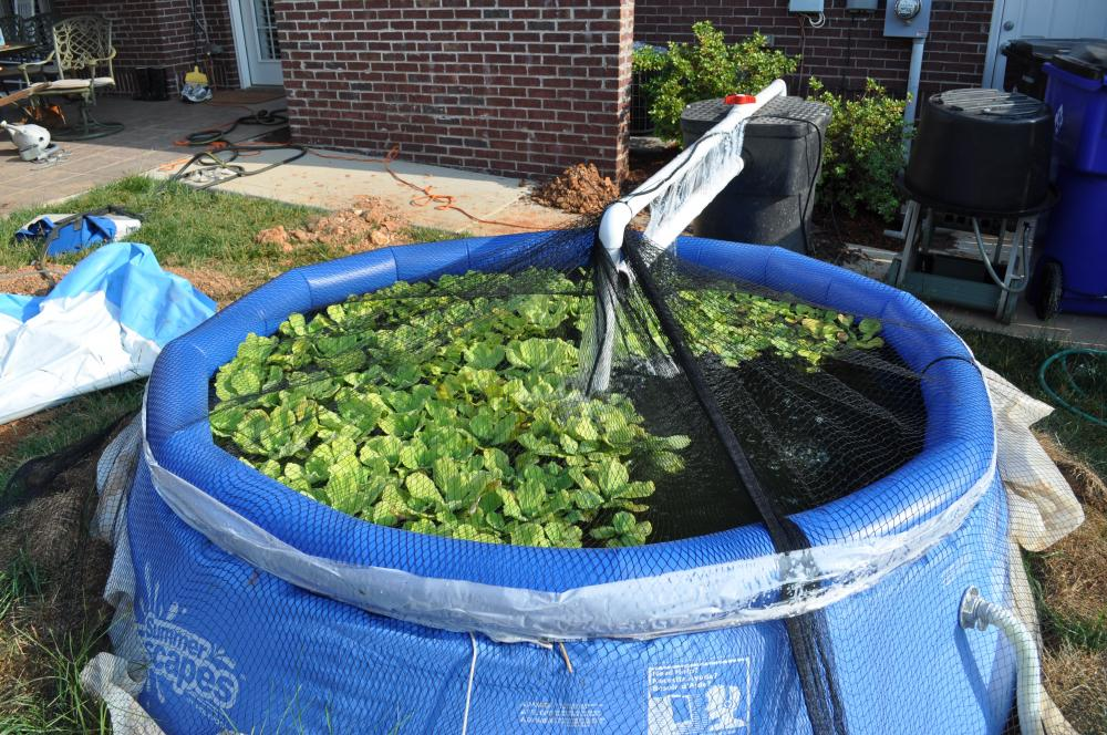 using portable pool as temporary pond ForTemporary Koi Pond