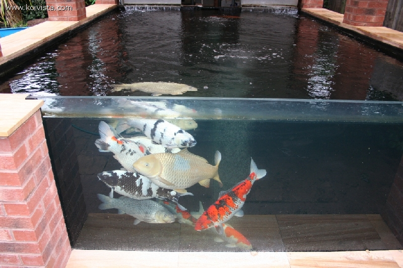 Pond window for a gunite plastered pond for Koi pond viewing window