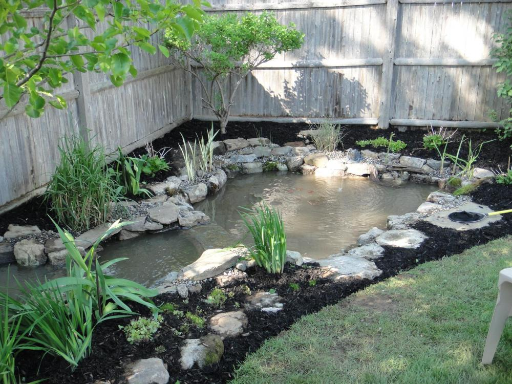Backyard Frog Pond a little frog pond with cascading stream