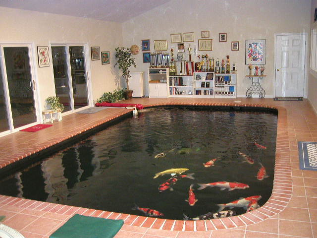 Art 39 s koidoc indoor pond for Koi pond inside house