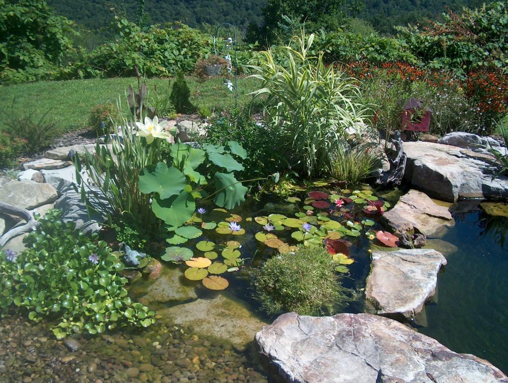 Bog filter for Koi pond forum