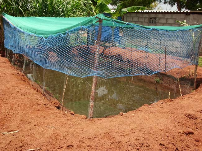 New pond suggestions for Koi pond india