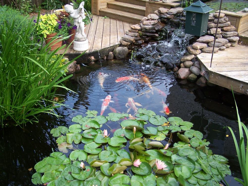 Thread Raised Formal Backyard Koi Pond
