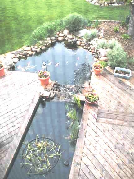Raised formal backyard koi pond for Koi pond forum