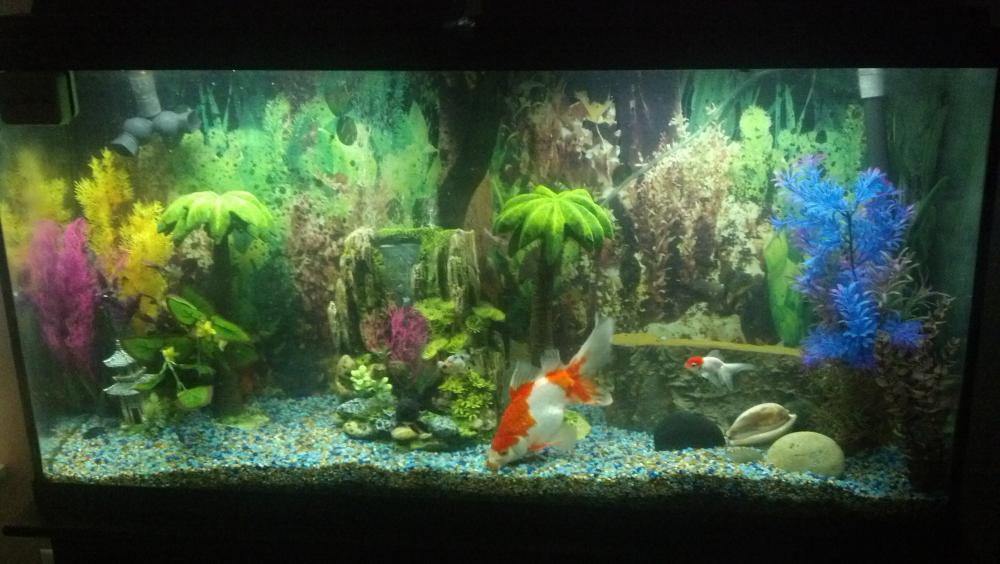 Fancy goldfish tank ideas for Fancy fish tanks