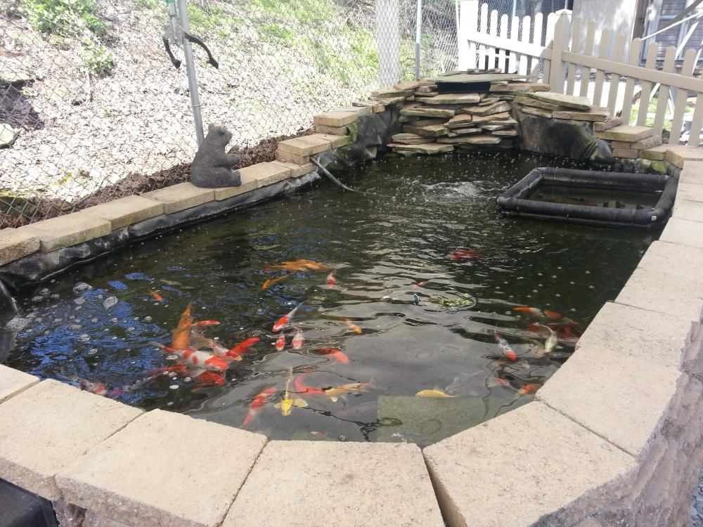Koi pond pictures for Koi pond bog filter