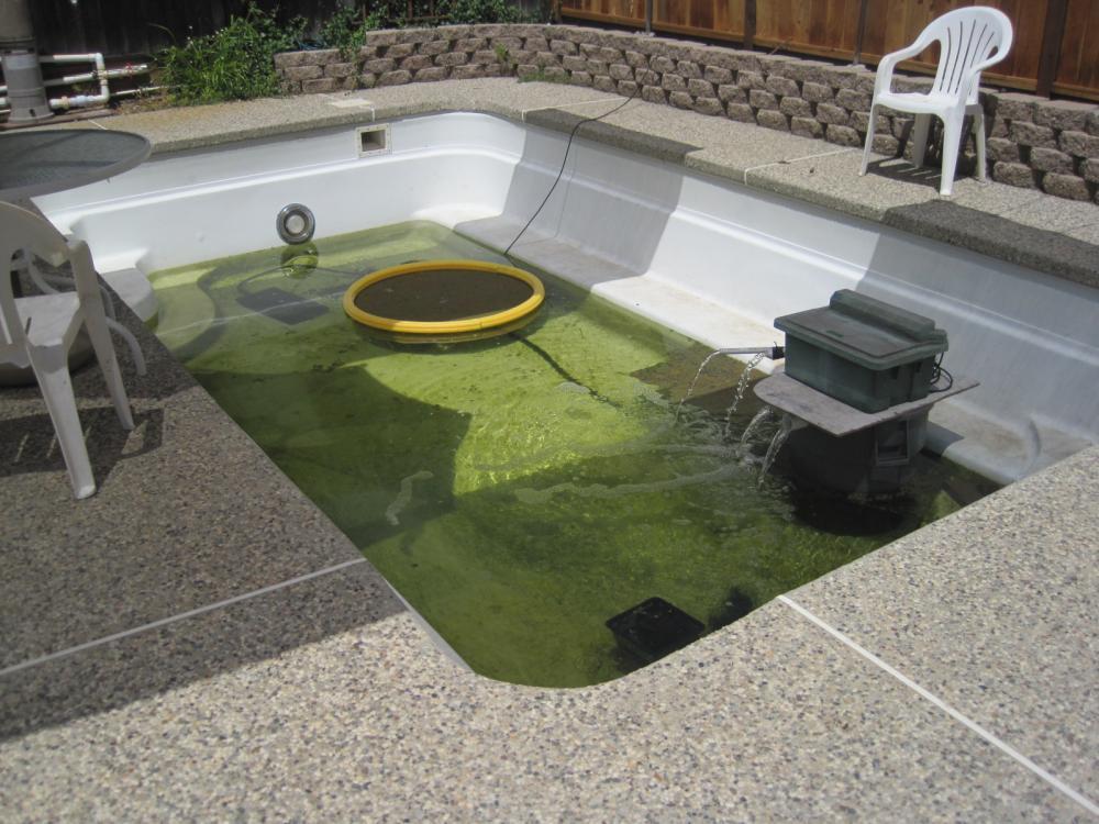Newbie with pool to pond koi goldfish turtles for Koi show pool