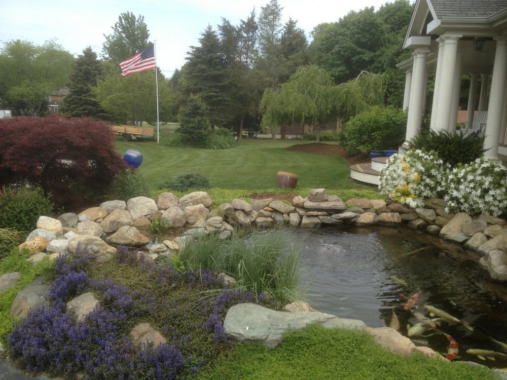 Bdel 39 s ri 8k gal pond renovation for Bog filter construction