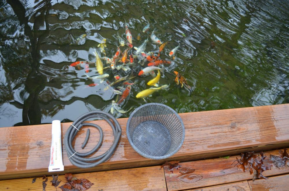 Diy floating plant islands for Cheap pond plants
