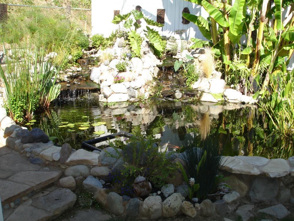 Our koi and ponds page 14 for Koi pond forum