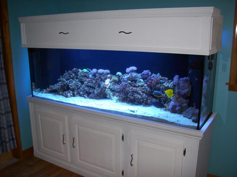 Aquarium substrate for small koi for Small fish tank stand