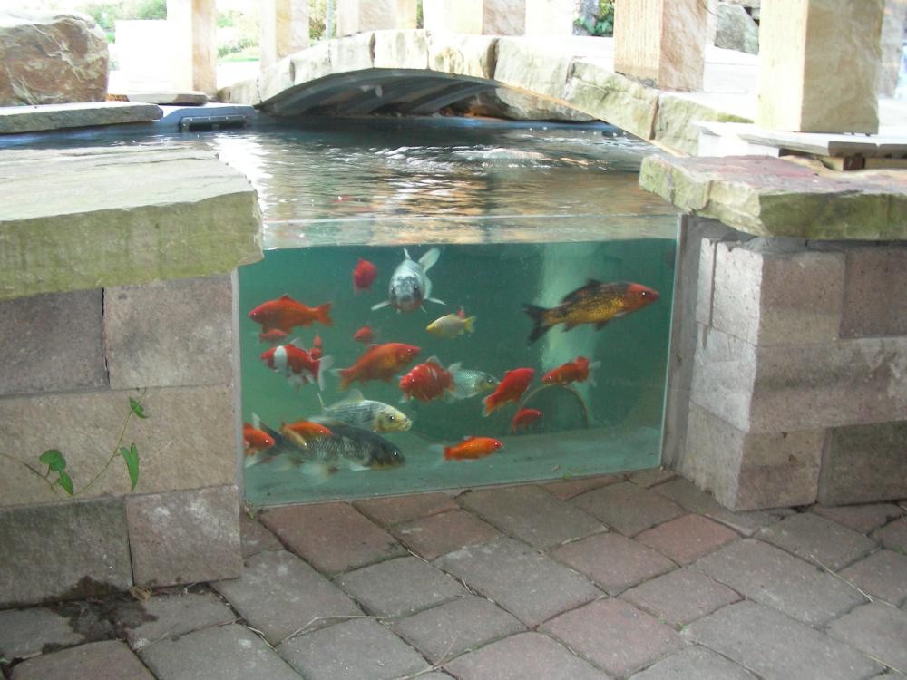 New pond with glass wall for viewing for Koi pond glass