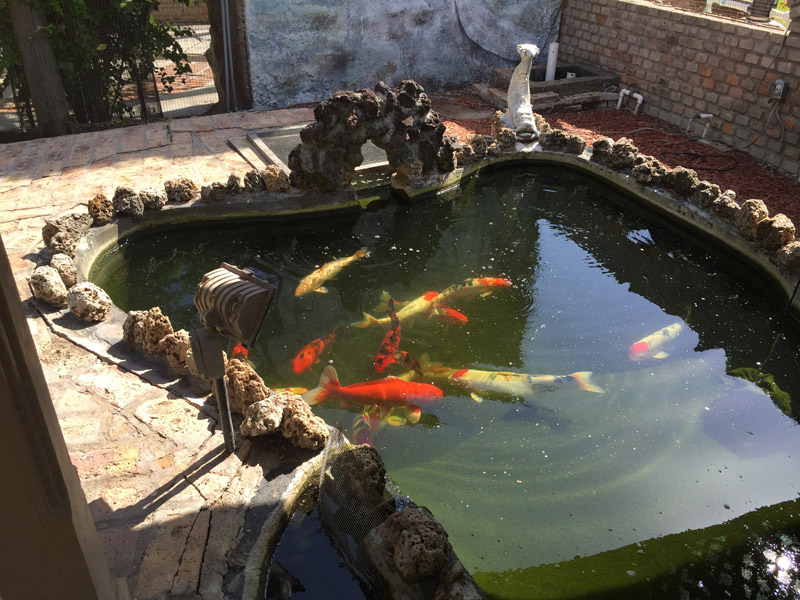 Name Koi Pond 5 Jpg Views 3167 Size 198 7 Kb