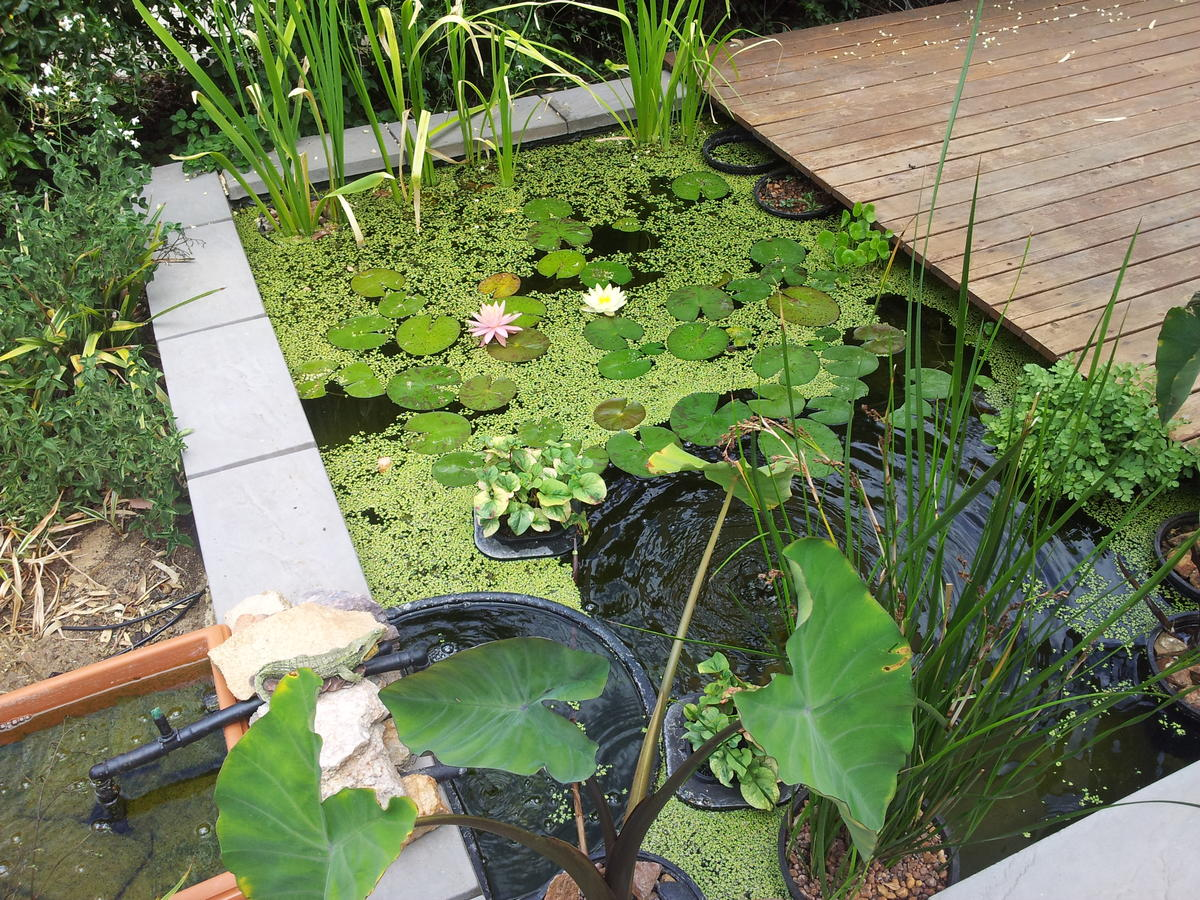 Radial 39 s ibc airlift pond for Airlift koi pond