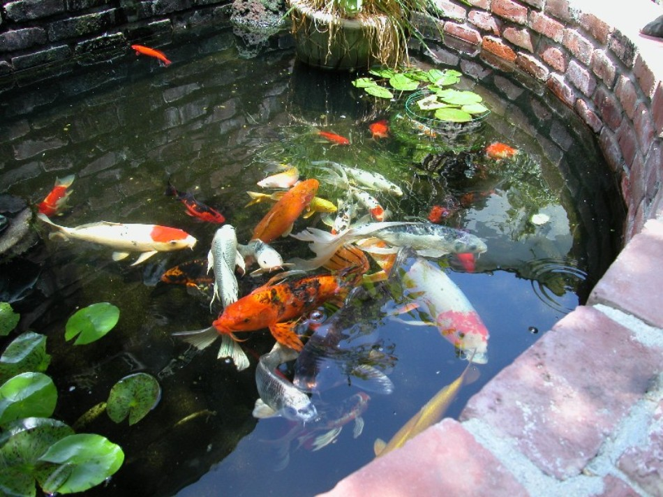 Which filter do you use on your koi pond page 2 for Used koi pond filters