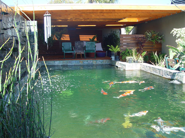 How deep is your pond page 3 for Pool to koi pond conversion