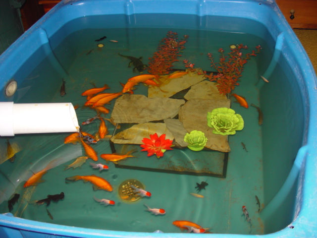 Indoor pond filter house of fishery lovers for Turn pool into koi pond